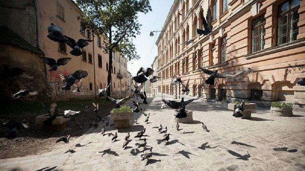 Головні новини Львова за 6 вересня