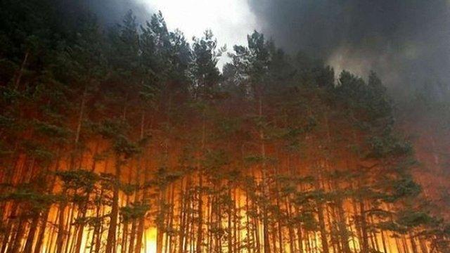 Масштабні пожежі в Росії: горить 13 тис. га сибірських лісів