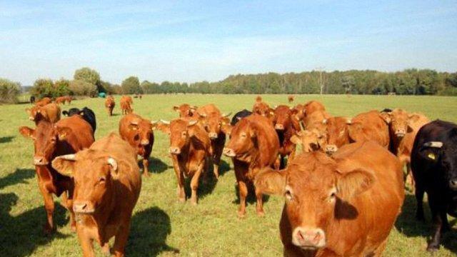 На Львівщині виплачують заборговані дотації за утримання худоби