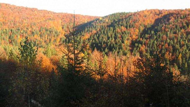 Ледида подарував Медведчуку 63 га закарпатського лісу