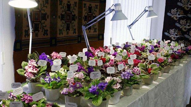 До Львова на виставку квітникарі привезли 300 сортів фіалок