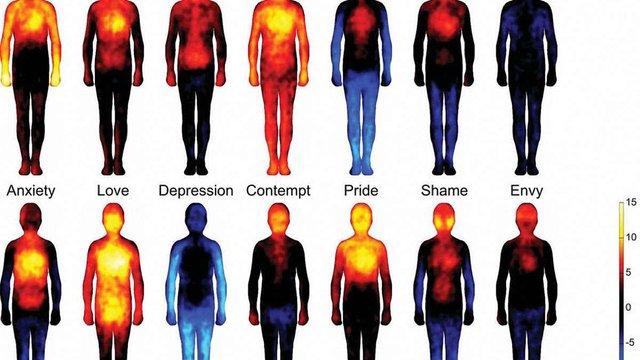 Вчені склали карту емоцій на тілі людини
