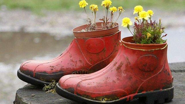 Стартував конкурс «Квіти в чоботях»