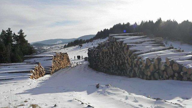 Після публікації ZAXID.NET прокуратура відреагувала на незаконну вирубку лісу на Старосамбірщині