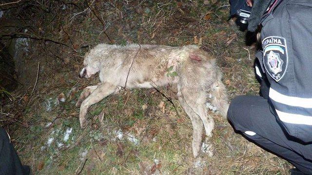 У Львові невідомий застрелив чотири собаки