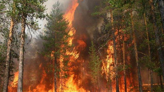 На Хмельниччині горіло понад 9 га хвойного лісу