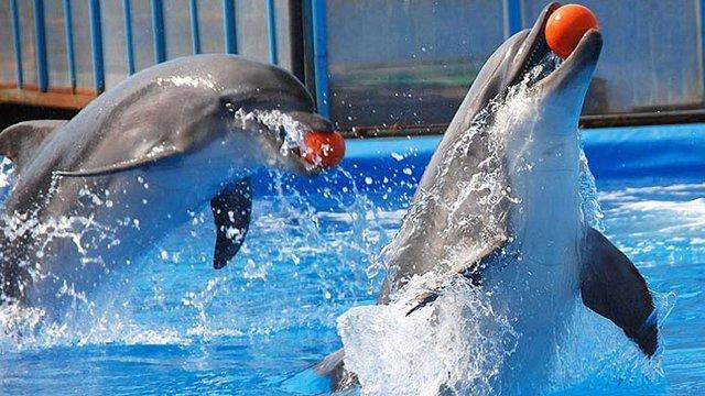 В Україні заборонили пересувні зоопарки та дельфінарії без природної морської води