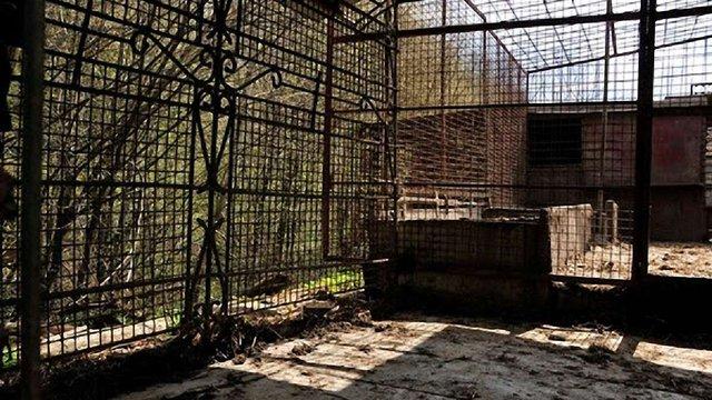 На Львівщині з розплідника мисливських собак зникли бурі ведмеді