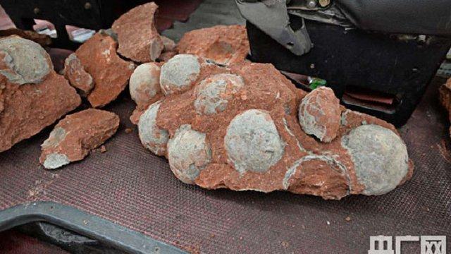 У Китаї знайшли 43 яйця динозаврів (фото)