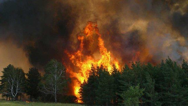 Поблизу Чорнобиля горить 320 га лісу