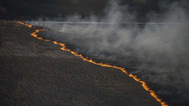 ДСНС: Причиною пожежі у Чорнобильській зоні може бути підпал