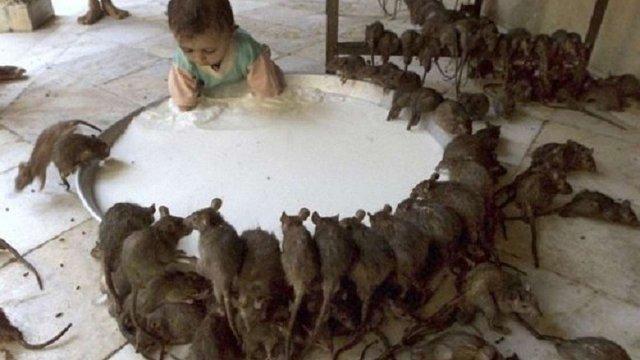 В Москві кількість щурів перевищила кількість людей, – Росспоживнагляд