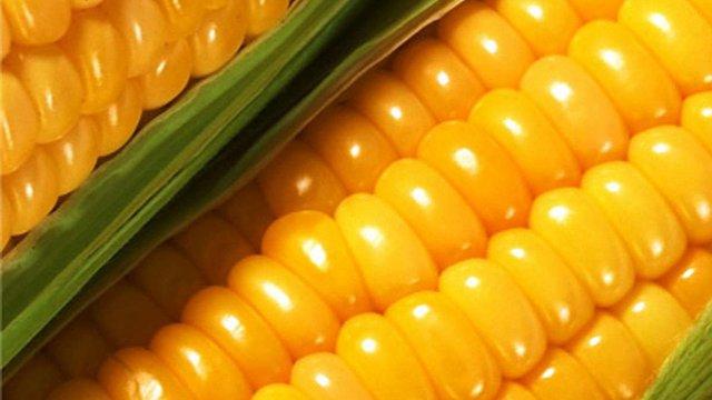 Україна стала лідером з експорту кукурудзи в Китай