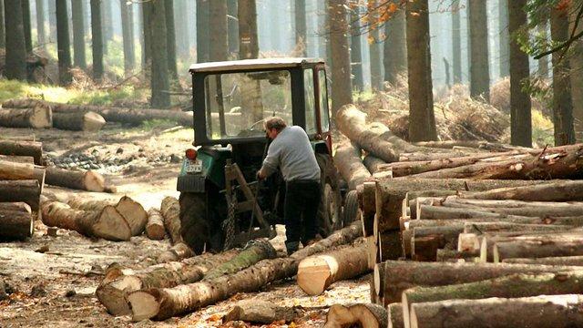 Порошенко схвалив десятирічний мораторій на експорт лісу