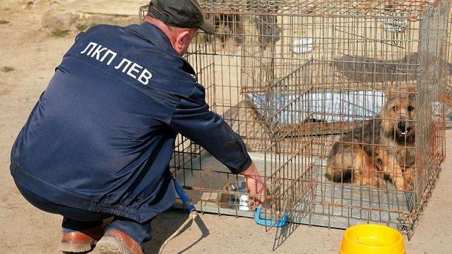 ЛКП «Лев» створить єдину в Україні базу безпритульних тварин міста