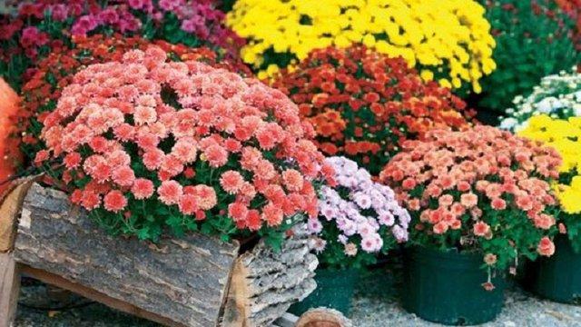 На Львівщині жінці присудили рік в'язниці за крадіжку квітів з могили