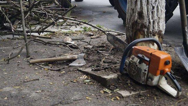До кінця вересня у Львові зріжуть всі сухі дерева