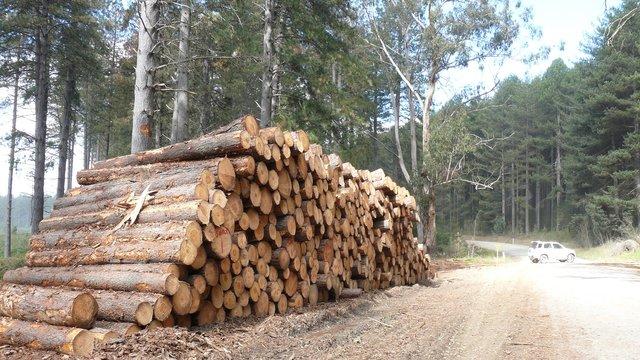 Москаль достроково заборонив експорт лісу із Закарпаття