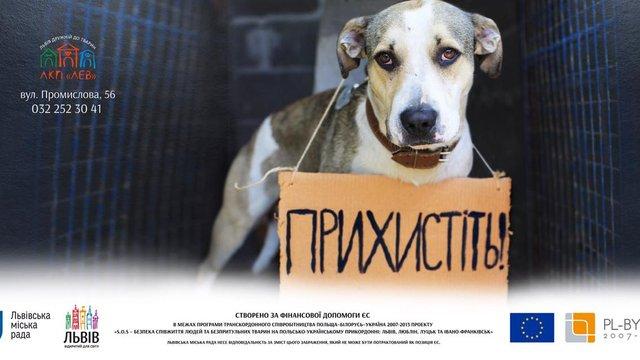 У Львові з'являться білборди із зображеннями безпритульних собак