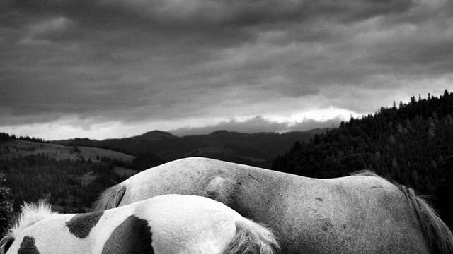 Львівський фотограф візьме участь у престижному бієнале в Австралії