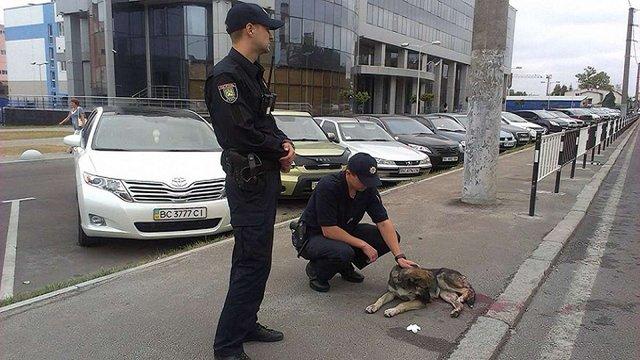 У Львові патрульні поліцейські надали допомогу травмованому собаці
