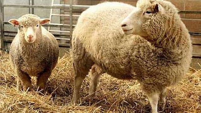 Європарламент заборонив клонування тварин і імпорт клонів в ЄС