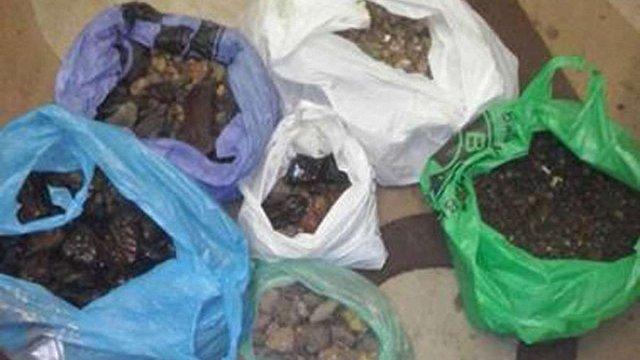 На Рівненщині СБУ вилучила незаконно видобутий бурштин на суму ₴1 млн