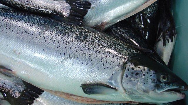 Військова академія у Львові купила 5 тонн лосося