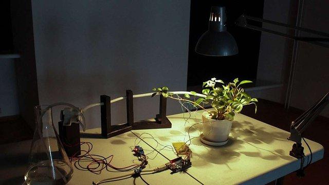 До львівського музею привезли виставку з «розумними» рослинами