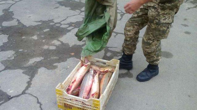 На Одещині затримали браконьєрів, які наловили риби на ₴750 тис.