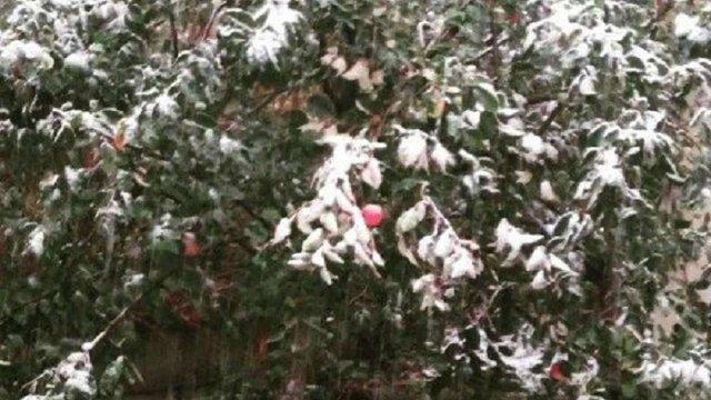 Чернівці вкрило першим снігом