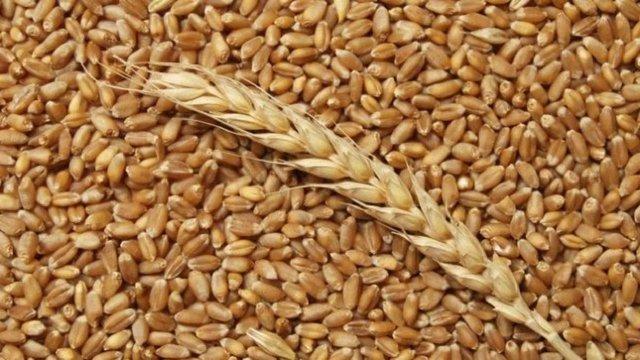 Україна посяде третє місце серед світових експортерів зерна, – Мінагрополітики