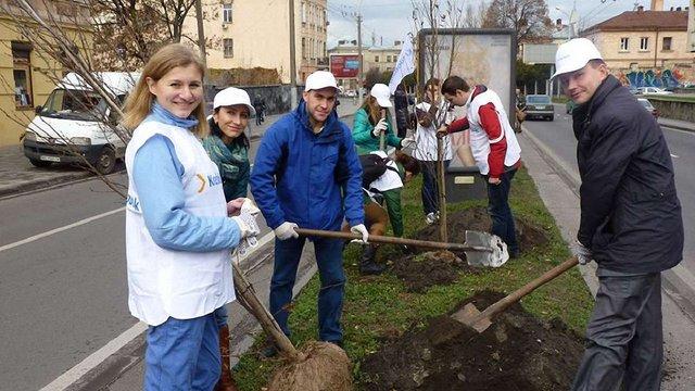 На проспекті Чорновола у Львові висадили алею грабів