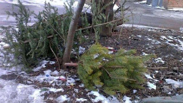 У Львові різдвяні ялинки збиратимуть для утилізації