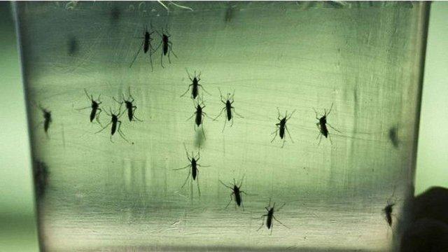 У Європі вперше зафіксований випадок зараження вірусом Зіка