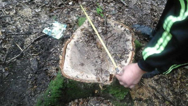 Керівника лісогосподарського підприємства на Львівщині покарають за незаконне вирубування дерев