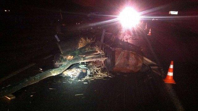 На трасі Львів-Шегині трапилася аварія через некерованих коней