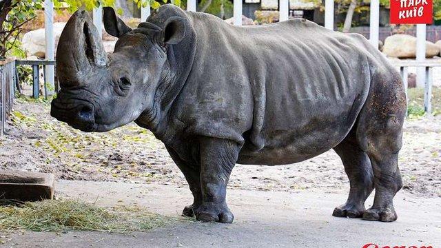 В Київському зоопарку помер найстаріший у Європі білий носоріг