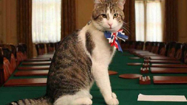 В МЗС Великобританії на роботу прийняли кота