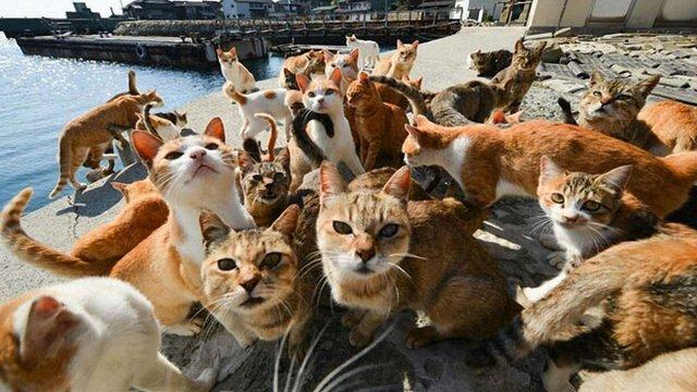 Кандидат на мера Риму обіцяє привезти до міста півмільйона котів