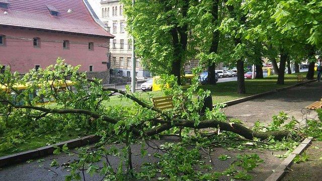У львівському сквері зламана гілка травмувала двох 11-річних дівчат