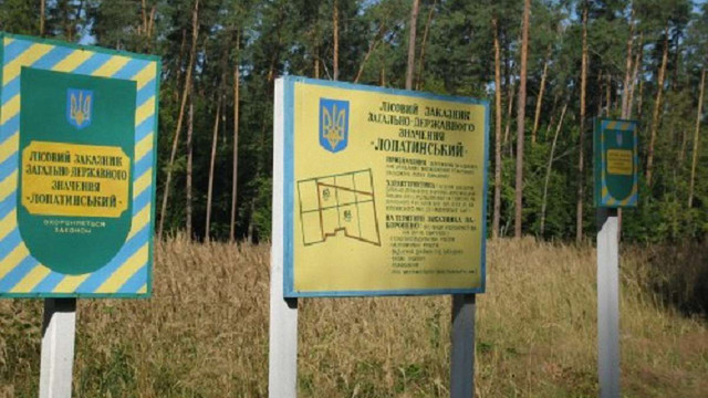 У заказнику на Львівщині вирубали сторічні сосни на суму ₴22 млн