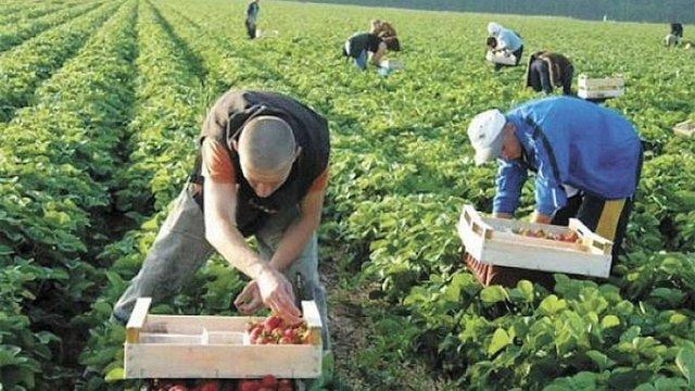 Українцям у Польщі платитимуть за працю на рівні з поляками
