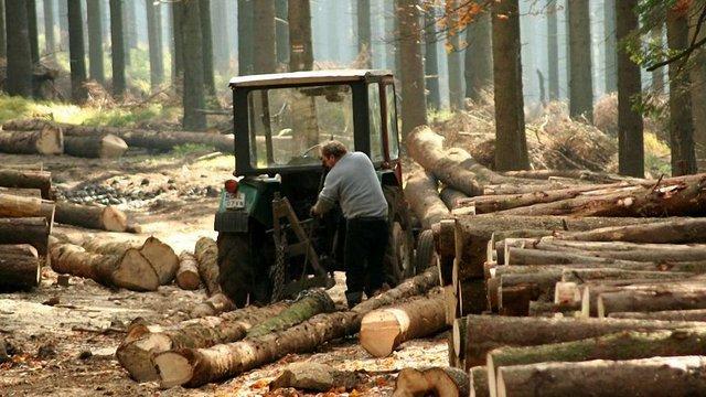 Усі працівники лісгоспу у Золочівському районі звільнились з роботи напередодні перевірки