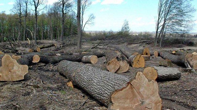 Кабмін ввів тимчасову заборону на санітарну вирубку лісу