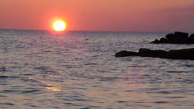 В Азовському морі для промислового вилову залишилося три зі сорока видів риби