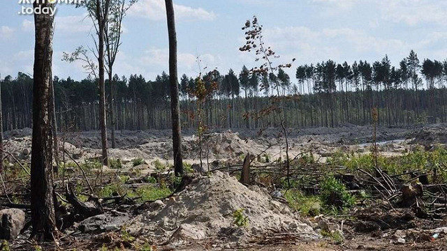 На Житомирщині сталася перестрілка між мешканцями села і заїжджими бурштинокопачами