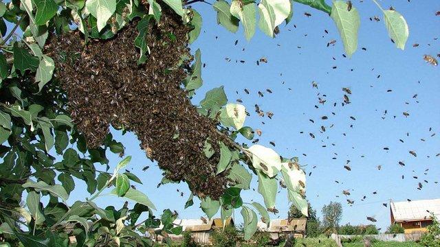 Чоловік на Львівщині помер від численних укусів бджіл