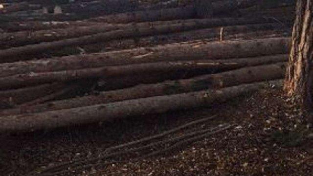 СБУ викрила в Буському лісгоспі незаконну вирубку дерев майже на ₴2 млн