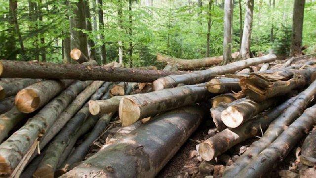 На Івано-Франківщині перешкодили незаконному експорту деревини на ₴9 млн